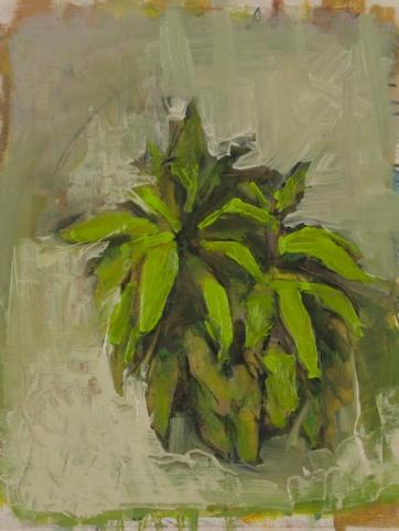 "Night Plant Study 10"" x 8"" Oil on Panel 2016"